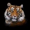 Pro-Art Glasbild Tiger I, Kunstdruck
