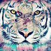 Salty & Sweet Tiger Graphic Art on Canvas
