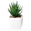 Mercury Row Alamak Desk Top Plant in Pot