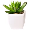 Mercury Row Alamak Desk Top Plant in Decorative Planter