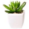 Mercury Row Schreibtisch-Topfpflanze Alamak