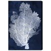 Mercury Row Farris Coral Fan Cyanotype 2 Graphic Art Wrapped on Canvas