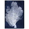 Mercury Row Leinwandbild Coral Fan Cyanotype 2, Grafikdruck