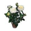 Three Posts Blume im Topf Nob Hill