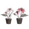 The Seasonal Aisle Christmas Star Desk Top Plant in Pot (Set of 2)