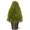 The Seasonal Aisle Juniper Upright Tree in Pot
