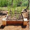 Jocelyne Redwood Raised Garden - Freeport Park Planters