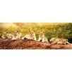 PRO ART 'Lion Cubs' Photographic Print