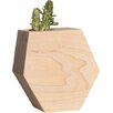 Boyce Studio Novelty Succulent Planter