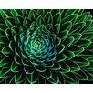 Wizard + Genius Senecio Nivalis Vlies Mini Fototapete 160 cm x 200 cm 4-teilig