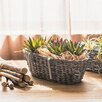 Rustic Cuisine Willow Hanging Wall Planter - G Home Collection Planters