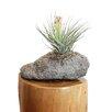 Sierra Artisan Pumice Pot Planter - Featherock Inc Planters