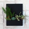 Madness Steel Wall Planter - Color: Black - Urban Mettle Planters