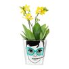 Ceramic Pot Planter - Size: 3.9 inch High x 4.25 inch Wide x 4.25 inch Deep - Donkey Products Planters