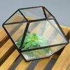 Glass Terrarium - Size: 8 inch High x 8 inch Wide x 8 inch Deep - Vasesource Planters