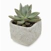 Regan Square Concrete Pot Planter - Bloomsbury Market Planters