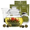Primula Teapot Experience Gift Set