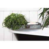 Evergreen Enterprises, Inc Decorative Trays