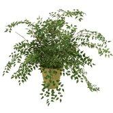 Distinctive Designs Faux Plants and Trees