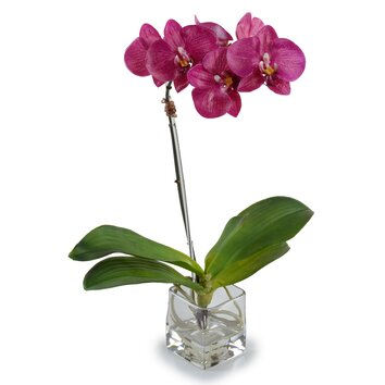 accent cabinets small faux phalaenopsis orchid wayfair 10432
