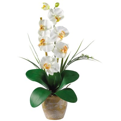 Nearly Natural Phalaenopsis Silk Orchid Flowers in Planter