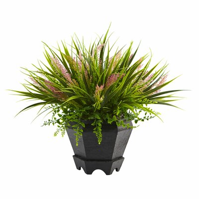 Grass in Planter