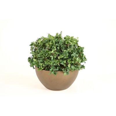 Distinctive Designs Silk Boxwood Floor Plant in Pot