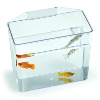 """Aquarium Specimen Container Tank Size: 7"""" H x 3.25"""" W x 6"""" D"""