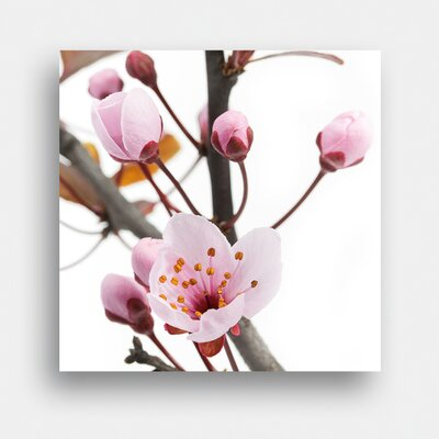 Eurographics Cherry Blossom by EG Design Team Photographic Print