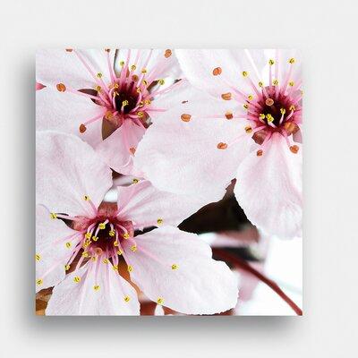 Eurographics Cherry Blossom by EG Design Team Photographic Print on Glass