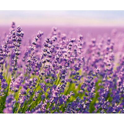 Eurographics Purple Lavender Flowers in the Field Wall Art