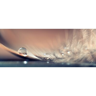 Eurographics Stories Of Drops Photographic Print Glass Wall Art
