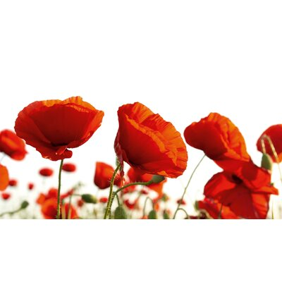 Eurographics Poppy Blossoms Wall Art