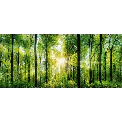 Eurographics Green Sunshine Photographic Print