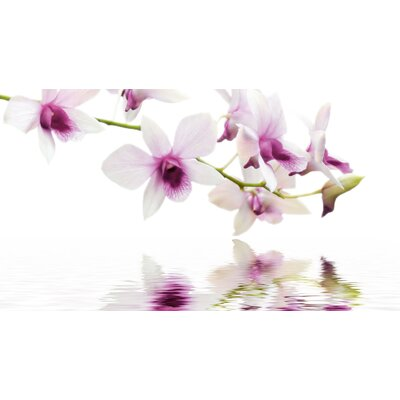 Eurographics Orchid Reflection Graphic Art Wall Print