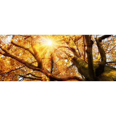 Eurographics Glorious Autumn Glass Wall Art