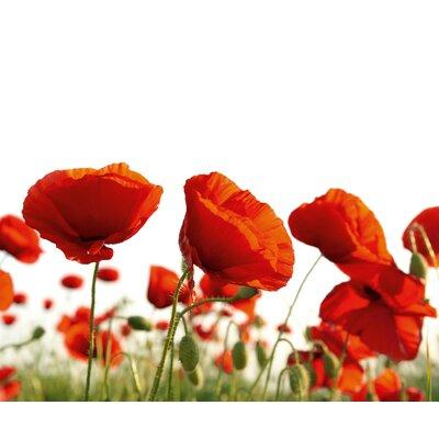 Eurographics Poppy Blossoms Graphic Art Wall Print