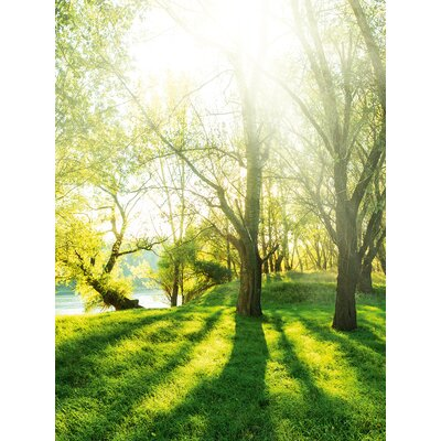 Eurographics Summer Forest Photographic Print