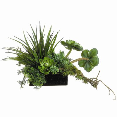 Tori Home Succulents in Square Ceramic Container