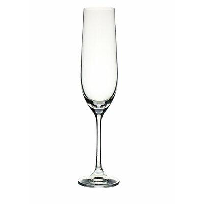 Ella Sabatini Bar 0.19L Champagne Flute in Clear