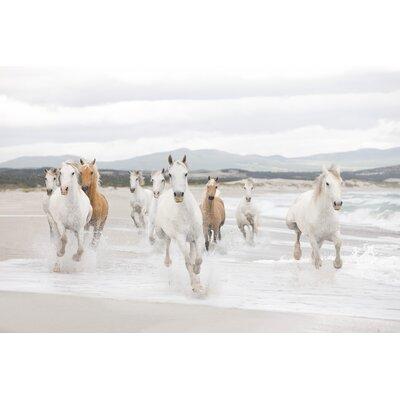 Komar White Horses 2.54m L x 368cm W Roll Wallpaper