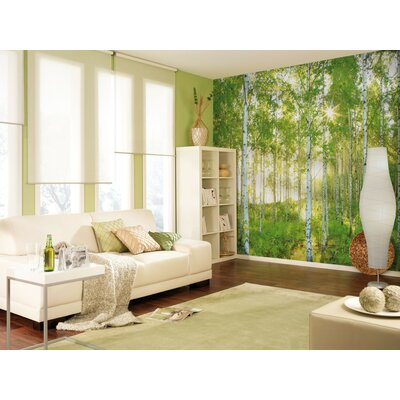 Komar National Geographic 4 Piece Sunday Spring Birch Tree Forest Wall Mural Set