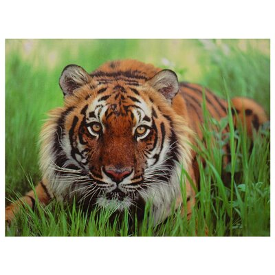 Oriental Furniture Crouching Tiger Photographic Print on Wrapped Canvas