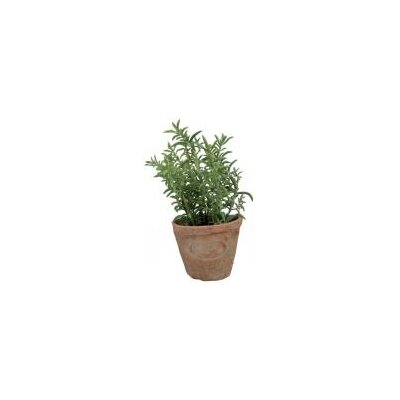 Fallen Fruits Thyme Plant in Round Planter