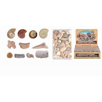 Fallen Fruits 24 Piece Decorative Fossil Mixed Box Sculpture Set