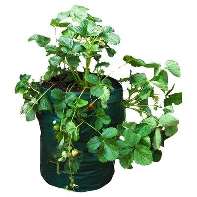 Greena Strawberry Planter