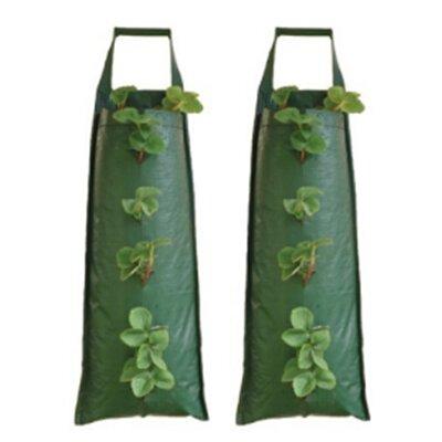 Greena Hanging Flower Tubes