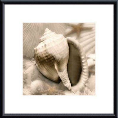 Printfinders Iridescent Seashell III by Donna Geissler Framed Photographic Print