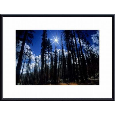 Printfinders 'Star Bright' by John K. Nakata Framed Photographic Print