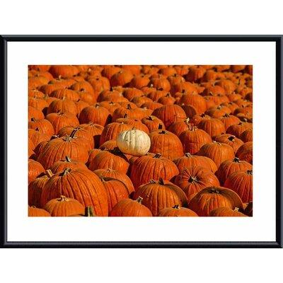 Printfinders 'White Pumpkin' by John K. Nakata Framed Photographic Print